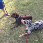 dog aggression photos