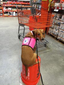 dog training hillsborough fl